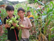 corn_party_in_2011 1