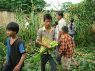 corn_party_in_2011 2